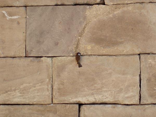 Pájaro en los muros del Templo