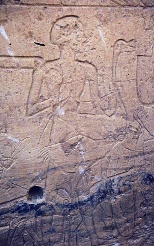 Fig. 7. Avestruz representada en el patio del templo de Beit el-Wali, en New Kalabsha. Foto S. Alegre