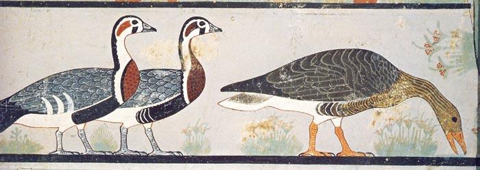 Fig. 2.- Ocas de Meidum (detalle parte derecha de la representación). Foto: Lorena Torres