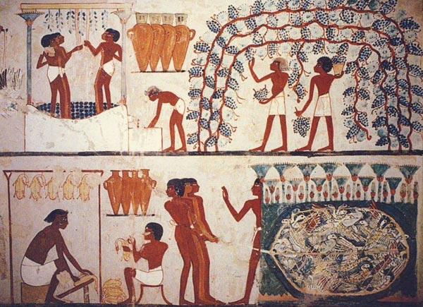 Fig. 4.- En la tumba de Nakht (TT52) se representó una escena vinícola y de matarifes de aves en registros superpuestos. Aunque a nivel visual existen pocos elementos simétricos, lo cierto es que sí existen una serie de paralelismos efectistas que podemos considerar una forma singular de simetría. Destaca por ejemplo que en ambas escenas, a la derecha, se expone la forma de aprovisionamiento de la materia prima: uvas (conseguidas en la vendimia) y ánades (conseguidos mediante la caza con una red). A la izquierda se narra en las dos imágenes el proceso de trabajo sobre esas materias primas: pisar la fruta para conseguir el mosto y matar las aves para quitarles las plumas. Hay en estas representaciones una buscada narrativa simétrica, enfatizada por detalles visuales y hasta por ciertas simetrías ópticas. Parece que quien creo estas escenas pretendía plasmar procesos dispares de una forma muy similar, narrando simétricamente la preparación de algo tan armónicamente complementario como el alimento y la bebida