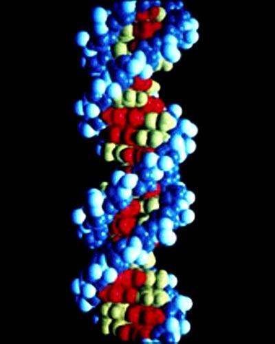 Foto 22 - La molécula de la vida