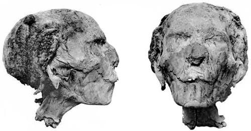 Fig. 4. Cabeza de la momia de la reina Tetisheri. (Catalogue of the Royal Mummies in the Museum of Cairo).